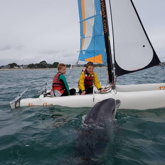 Voile scolaire rencontre avec un grand dauphin